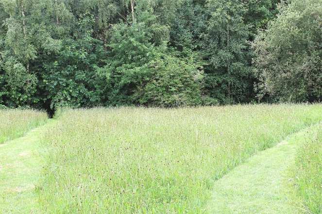 Weleda Insight Day Wildflower Meadow